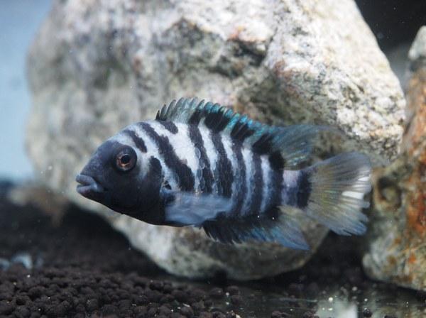 Satohfish