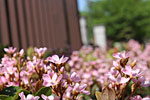s_flower_01.jpg