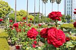 s_flower_011.jpg