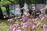 s_flower_03.jpg