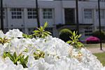 s_flower_04.jpg