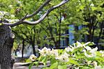 s_flower_06.jpg