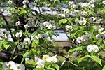 s_flower_08.jpg