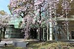 s_spring_011.jpg