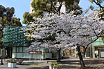 s_spring_012.jpg