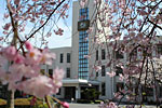 s_spring_016.jpg