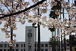 s_spring_017.jpg