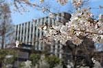 s_spring_018.jpg