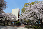 s_spring_020.jpg