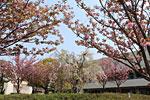 s_spring_03.jpg