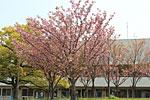s_spring_04.jpg