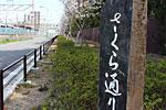 s_spring_06.jpg