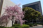 s_spring_07.jpg