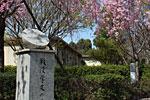 s_spring_09.jpg