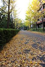 s_autumn_2015_007.jpg