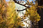 s_autumn_2015_008.jpg