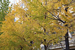 s_autumn_2015_012.jpg