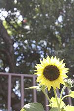 s_summer2015-016.jpg
