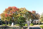 s_autumn_2016_15.jpg