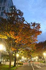 s_autumn_2016_16.jpg