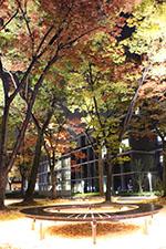 s_fall_008.jpg