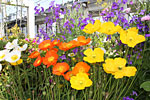 s_garden_07.jpg