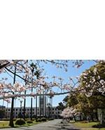 s_sakura002.jpg