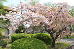 s_spring_02.jpg