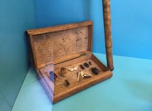 ダーウィンの採集箱