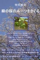 理学部附属植物園で「特別展示『緑の桜のルーツをさぐる』」を開催(3月29日~4月29日)
