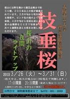 理学部附属植物園で『枝垂桜(桜山)』のライトアップを開催(3月26日~3月31日)