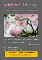 理学部附属植物園で「植物観察会『桜』」を開催