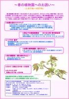 大阪市立大学理学部附属植物園「枝垂れ桜のライトアップ」など春のイベント開催