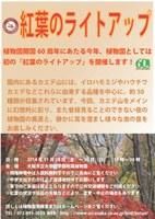 理学部附属植物園「紅葉のライトアップ」を開催!