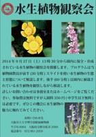 理学部附属植物園「水生植物観察会」を開催