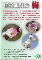 植物観察会「梅」を開催します