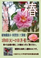 理学部附属植物園「椿の切花展示」(3/8~3/21)