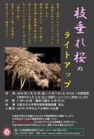 理学部附属植物園 「枝垂れ桜のライトアップ」(3/25~31)