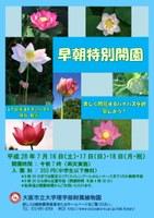 ~早朝特別開園~ 美しく開花するハナハスを観察しよう!(7/16~7/18)