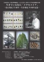 大阪市博物館協会・大阪市立大学包括連携協定企画 「生きている化石[メタセコイア]」(10/22~11/27)