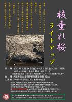 理学部附属植物園 「枝垂れ桜のライトアップ」
