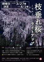 ~夜空に輝く迫力~「枝垂れ桜のライトアップ」