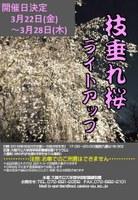 【開催日決定】~まるで日本画のような幽玄な世界が広がる!~「枝垂れ桜のライトアップ」