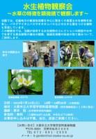 理学部附属植物園 水生植物観察会 ~水草の特徴を顕微鏡で観察します~