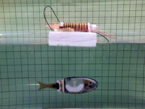 「FC robofish」写真