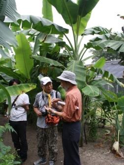 熱帯植物の植え出し風景