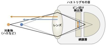 図2 ハエトリグモの目でのピンぼけ検出と距離測定