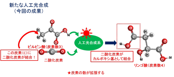 図2.新規人工光合成(今回の成果)