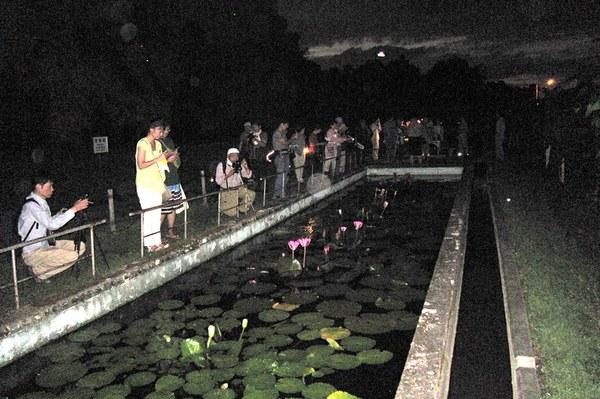 夜咲き熱帯スイレン観察会の様子