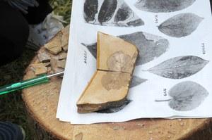 見つけた化石